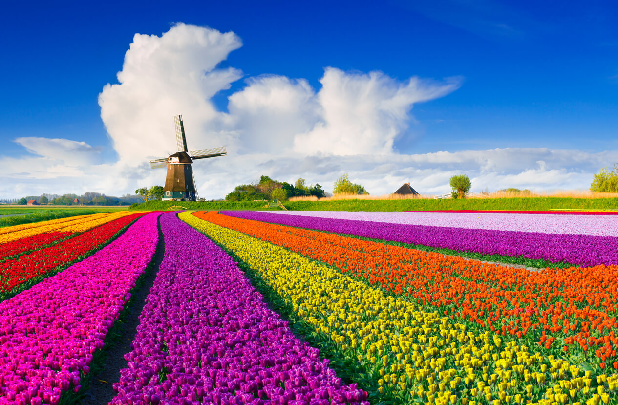 Holanda primavera