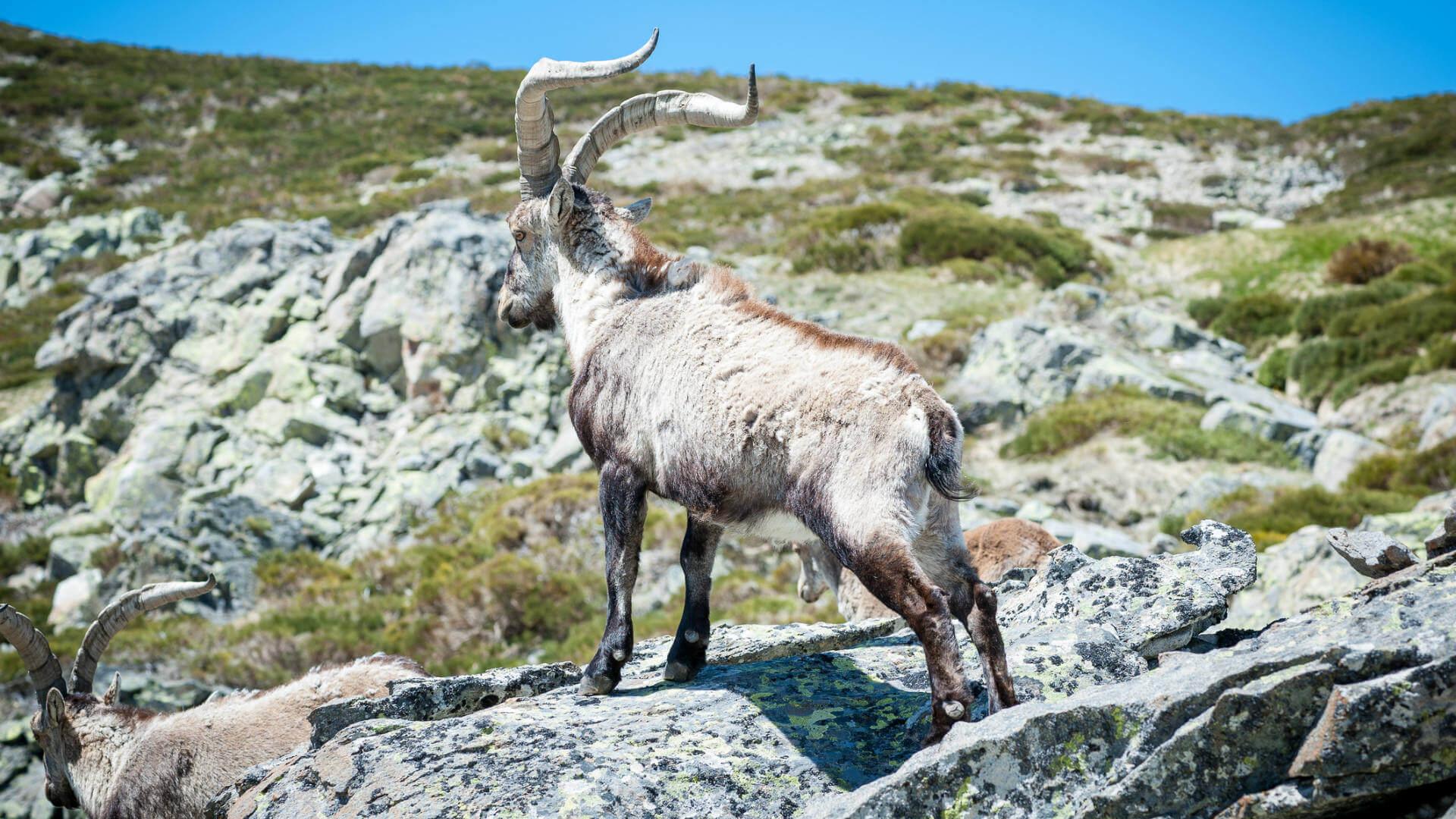 Rutas Por La Sierra De Gredos Los Mejores Planes Para El Invierno
