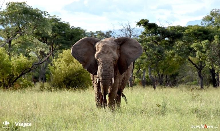 Aventuhero Elefante