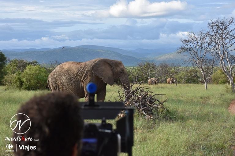Cuando los elefantes posan
