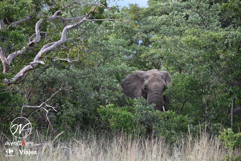 Elefante escondido