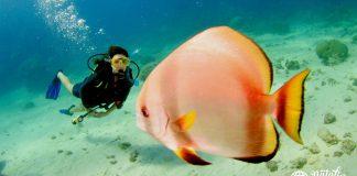 Natalia por el mundo, Gran barrera de coral