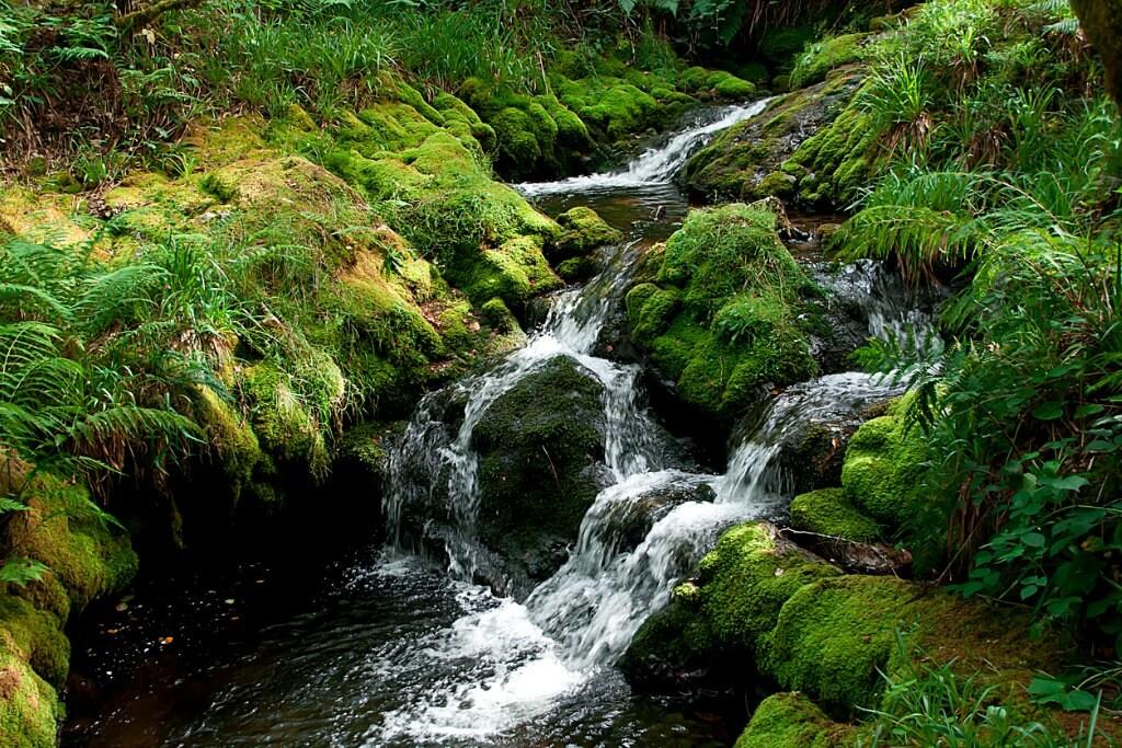 Mejores bosques de España, Muniellos