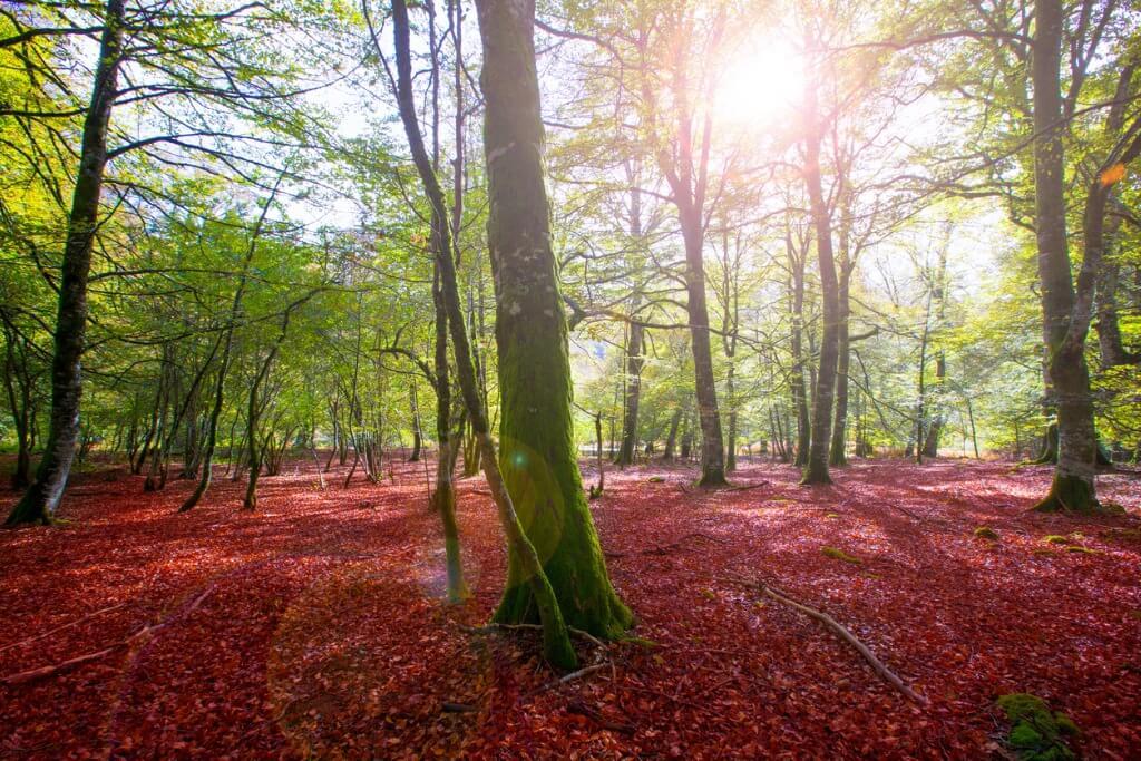 Mejores bosques de España, Selva de Irati