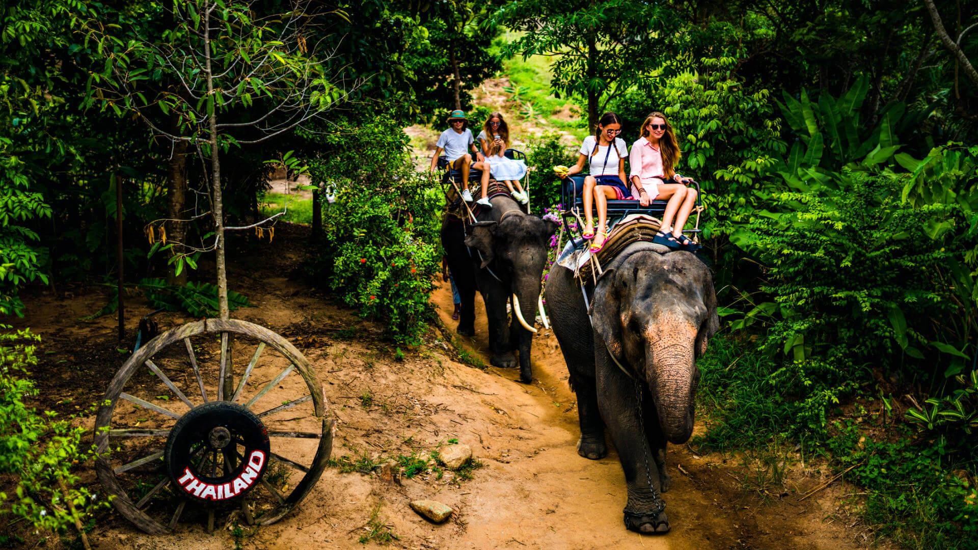 viajes exoticos elefantes