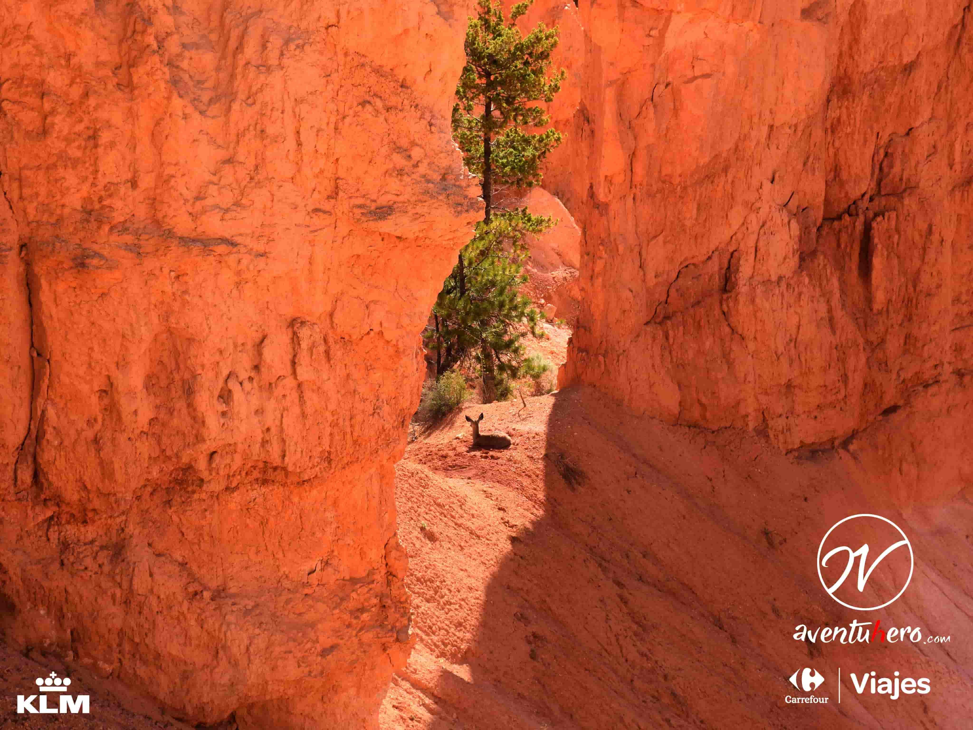 fauna bryce canyon