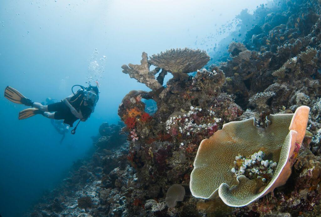 Practicando submarinismo