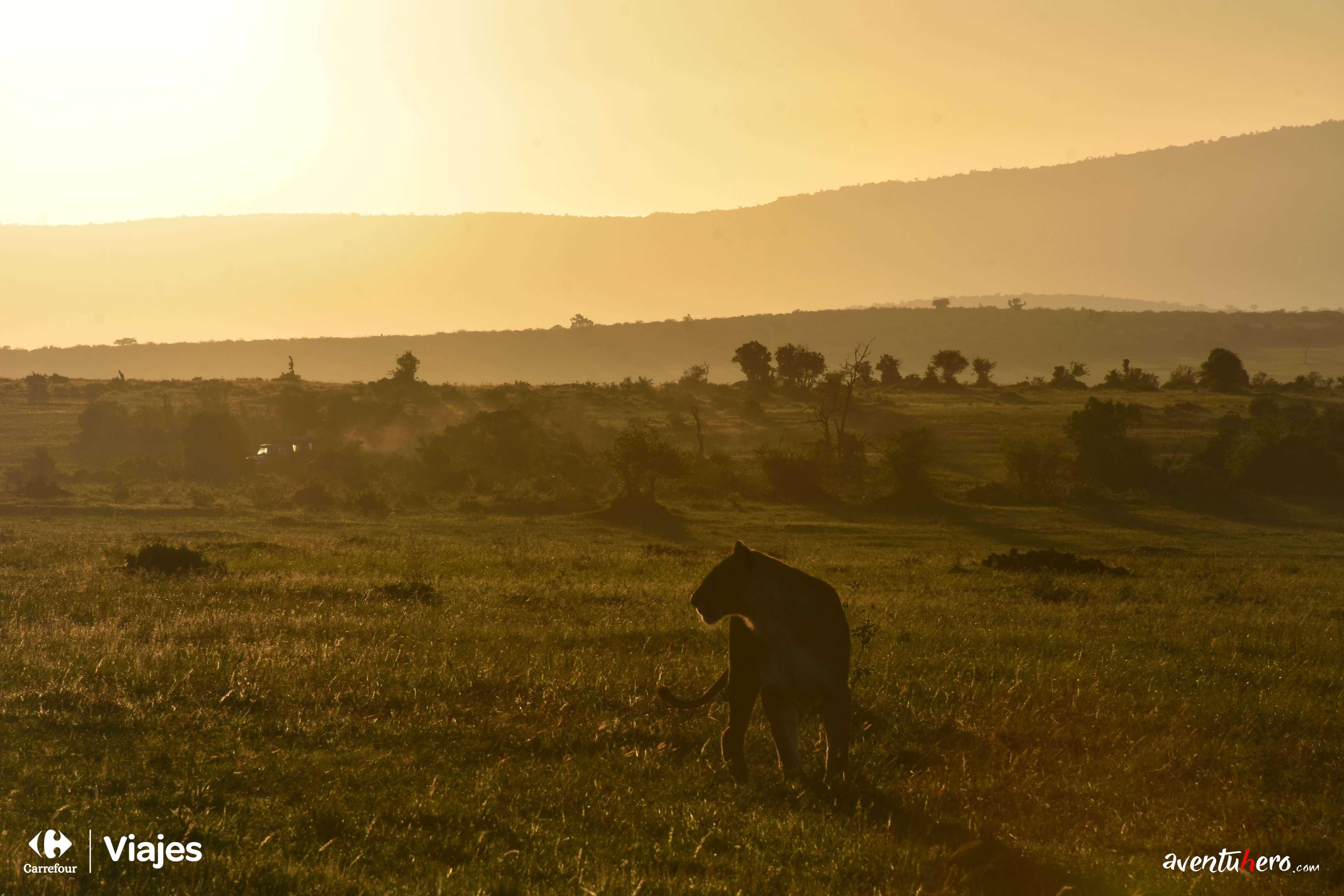 1 León atardecer Masai