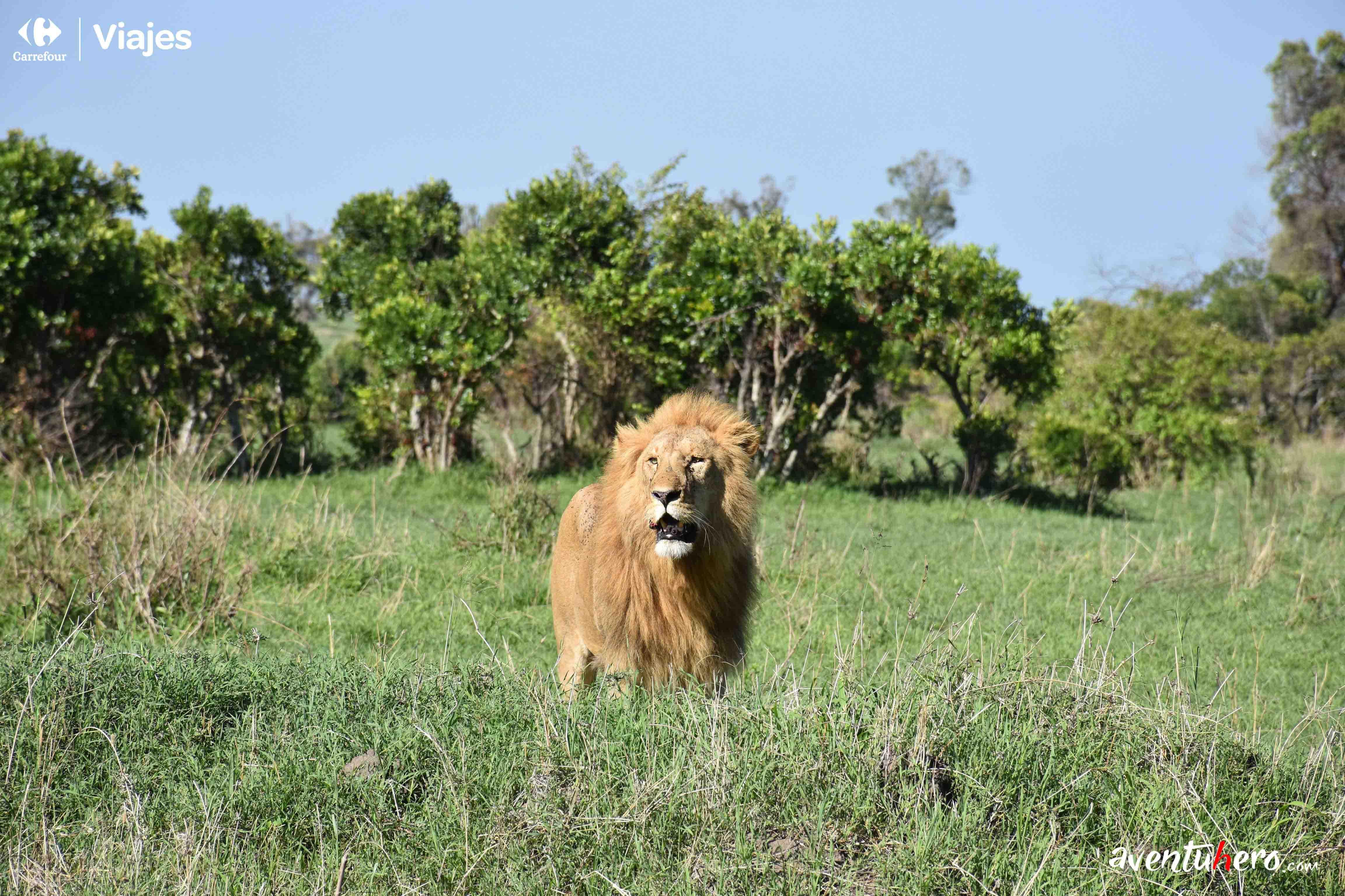 3 Leon Masai