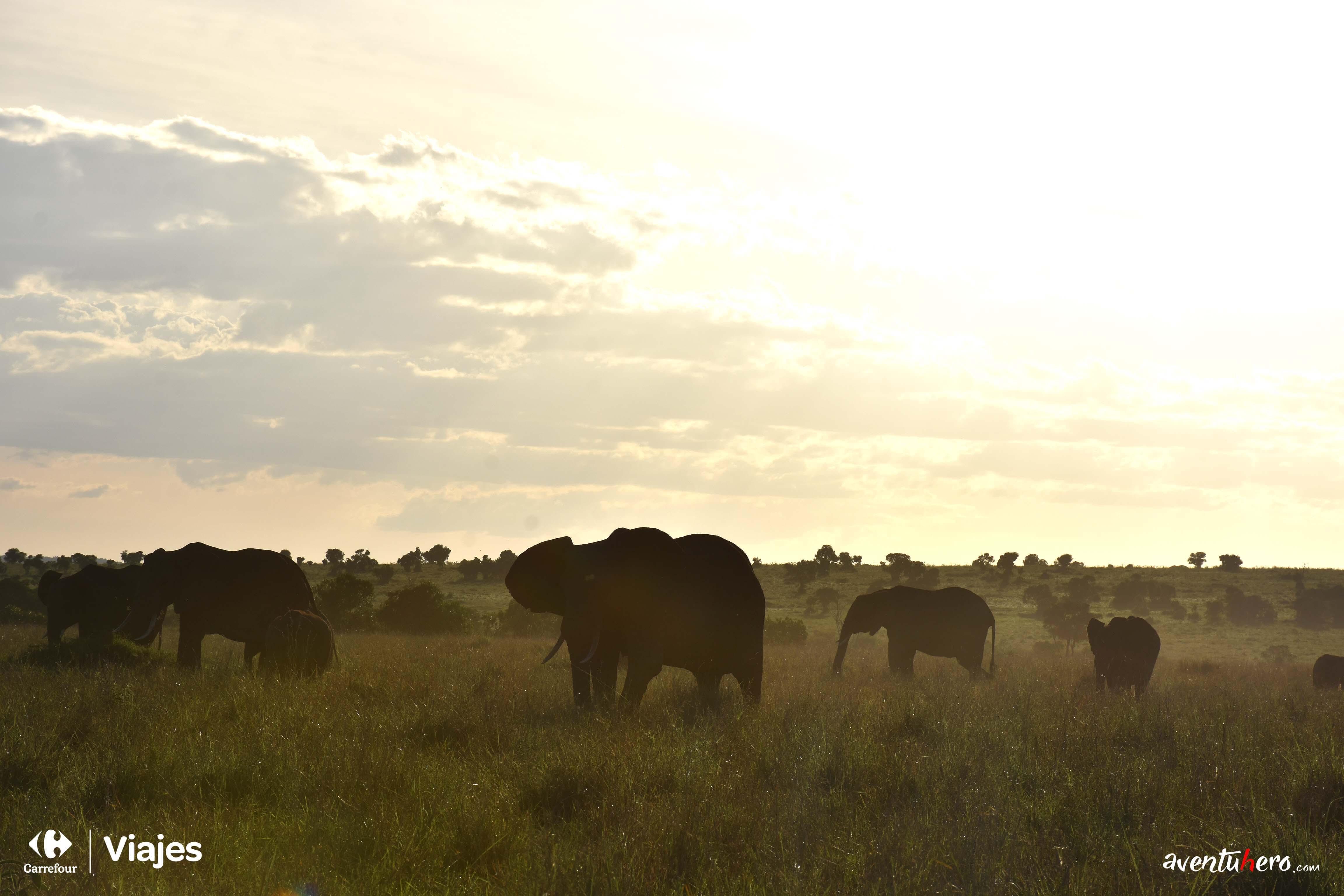 9 Elefantes Masai