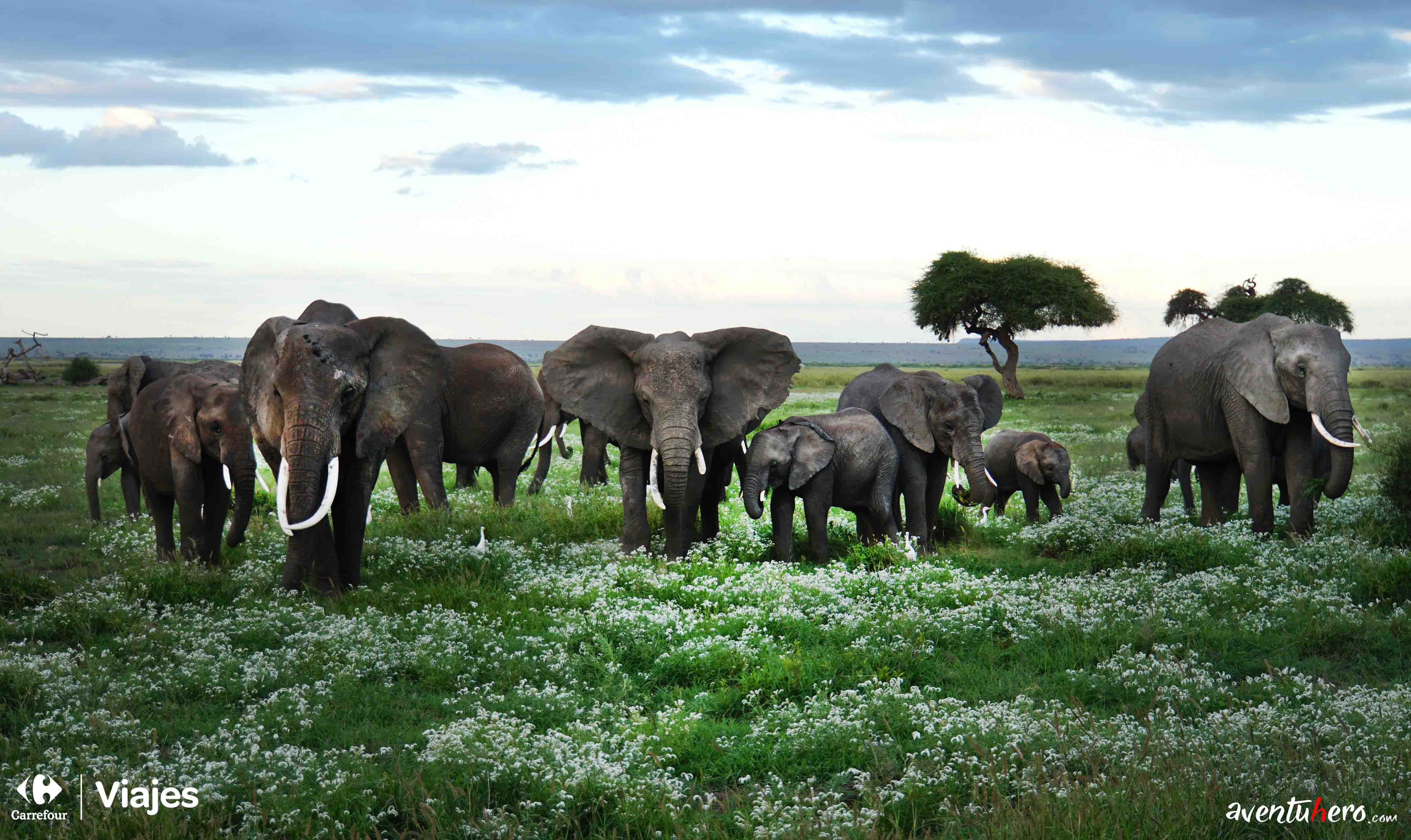 elefantes de frente a la camara durante un safari en la reserva Amboseli