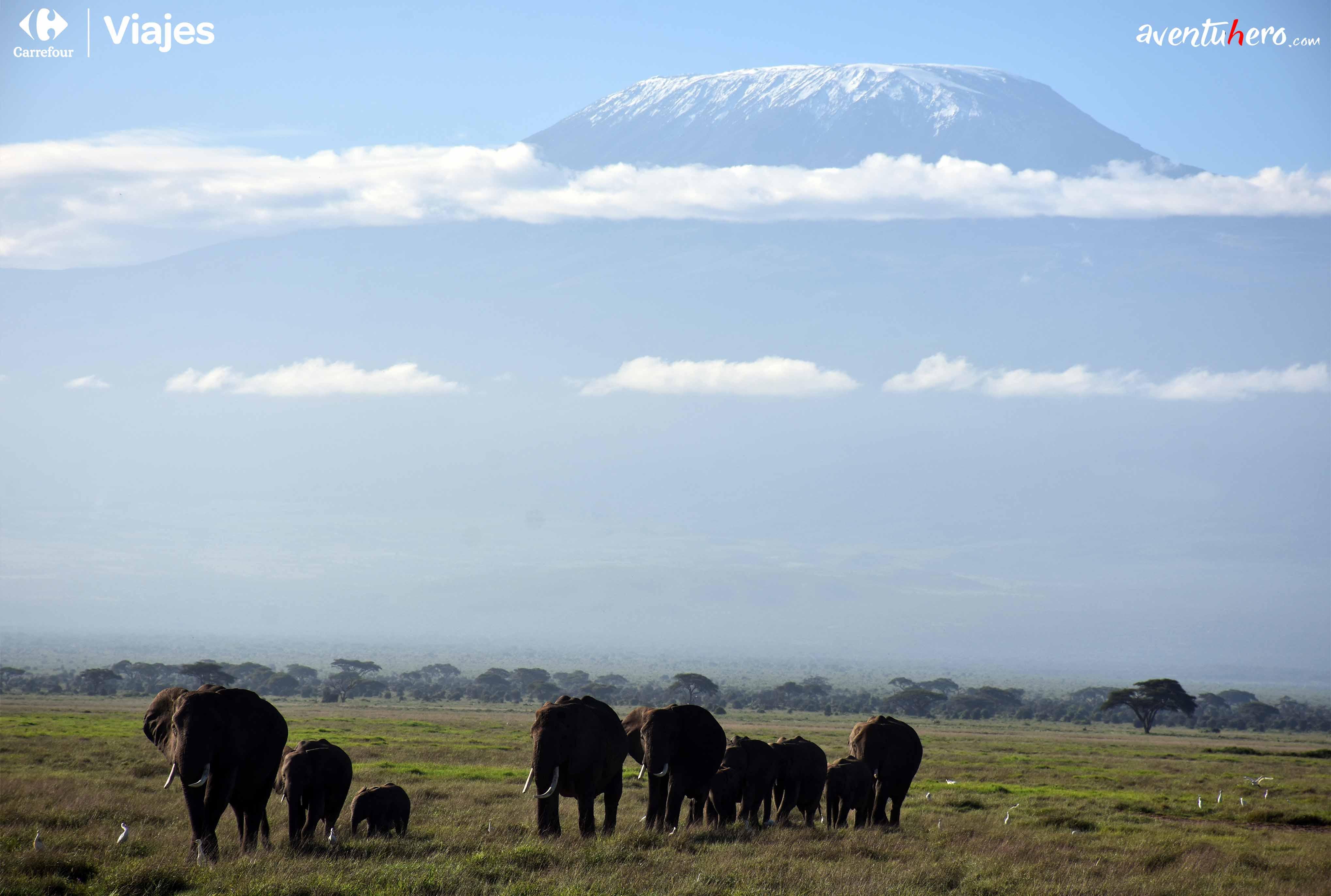 vista del kilimanjaro de fondo
