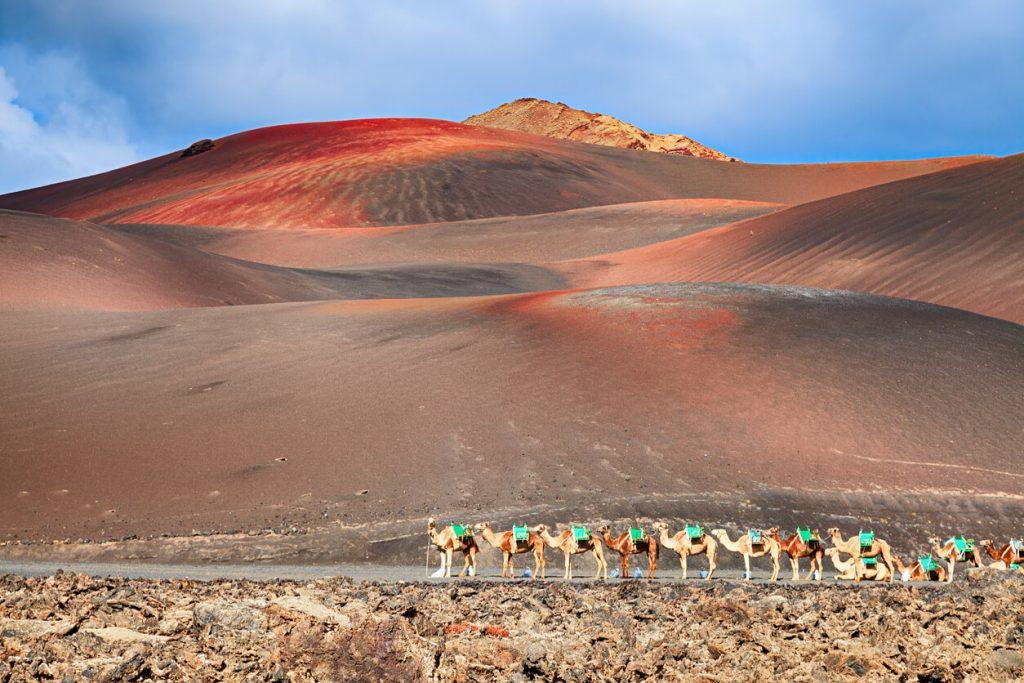Camellos de montar a caballo están esperando turistas en Parque Nacional de Timanfaya, Lanzarote, Canarias