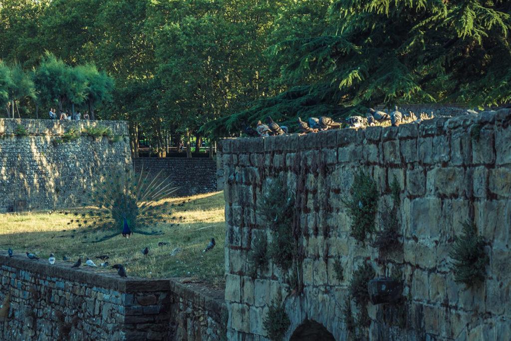 Aves y animales se pasean cerca de un foso en Pamplona