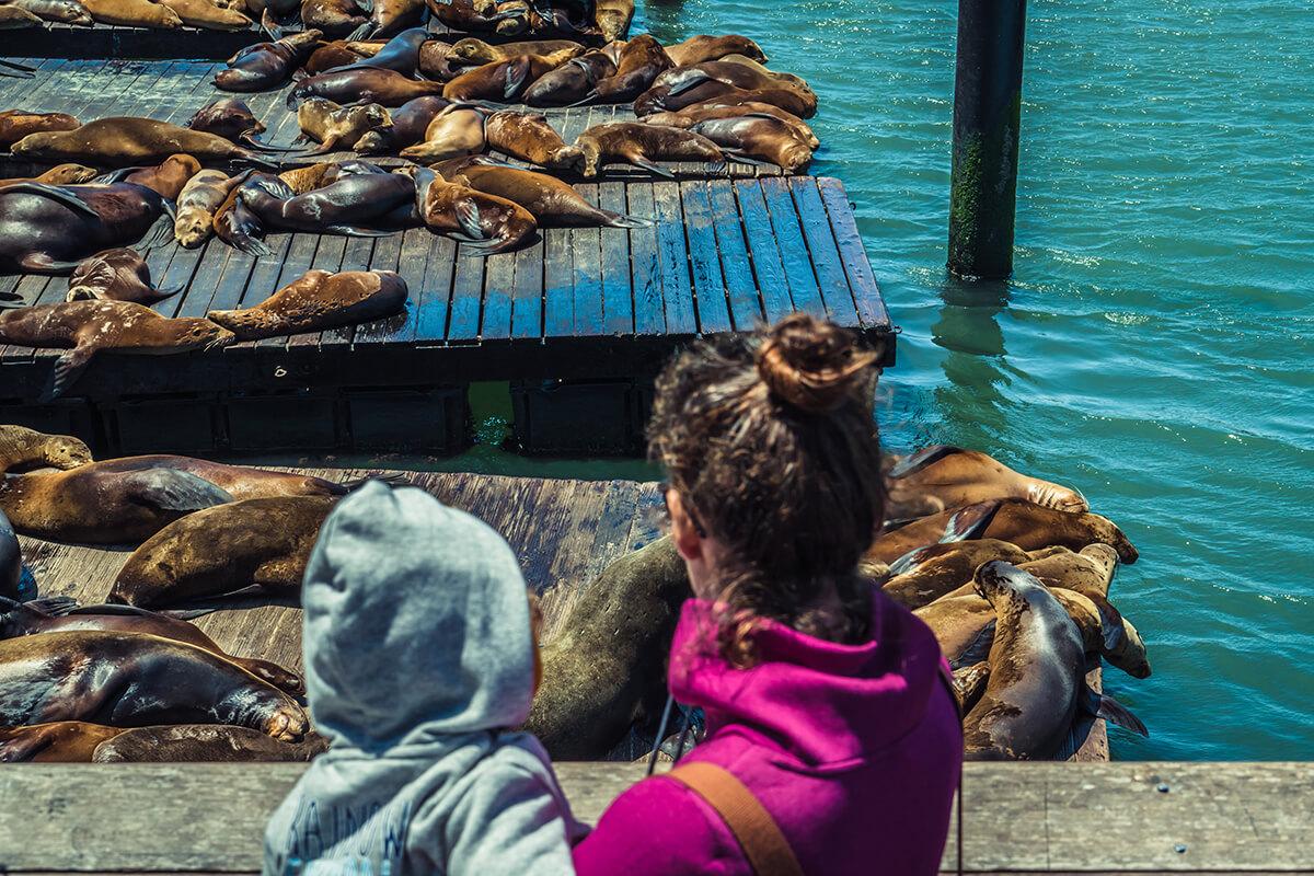 colonia de leones marinos en el muelle de San Francisco