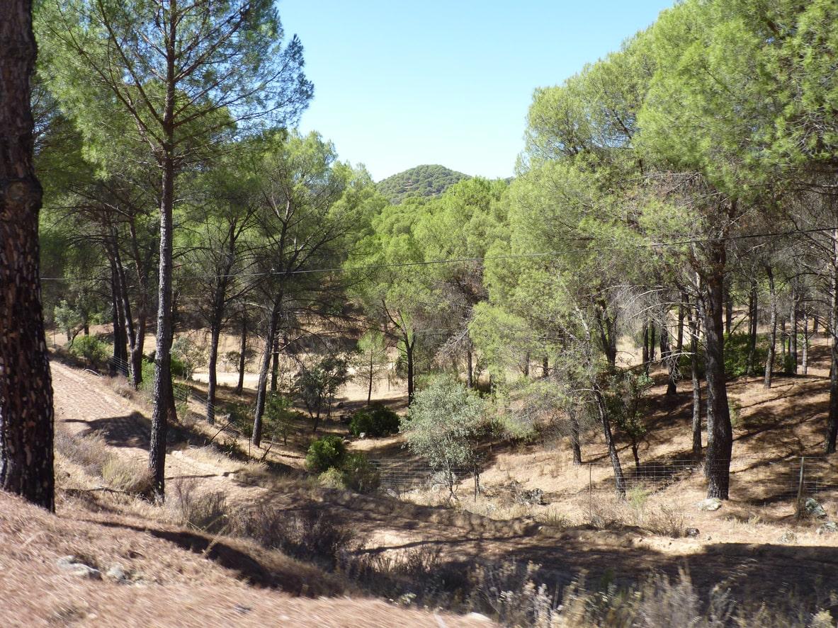 Sierra de Andújar, Jaén