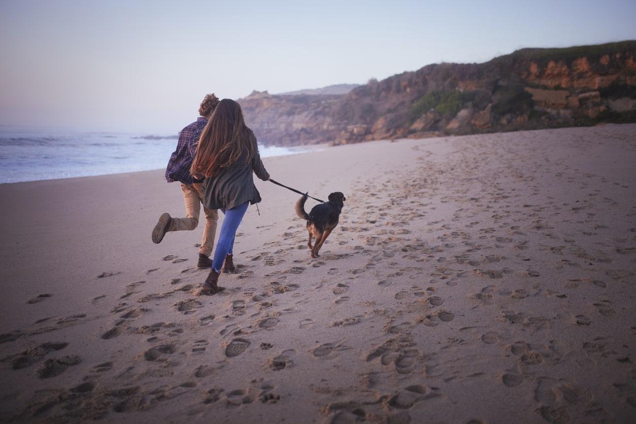 mejores hoteles mascotas en la costa