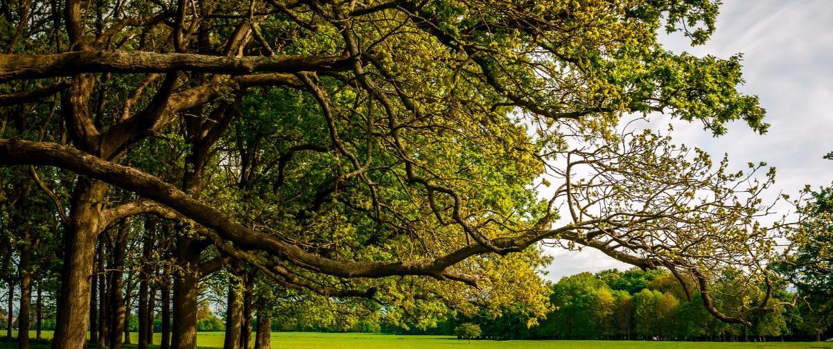 Guía Dublín, Parque Phoenix