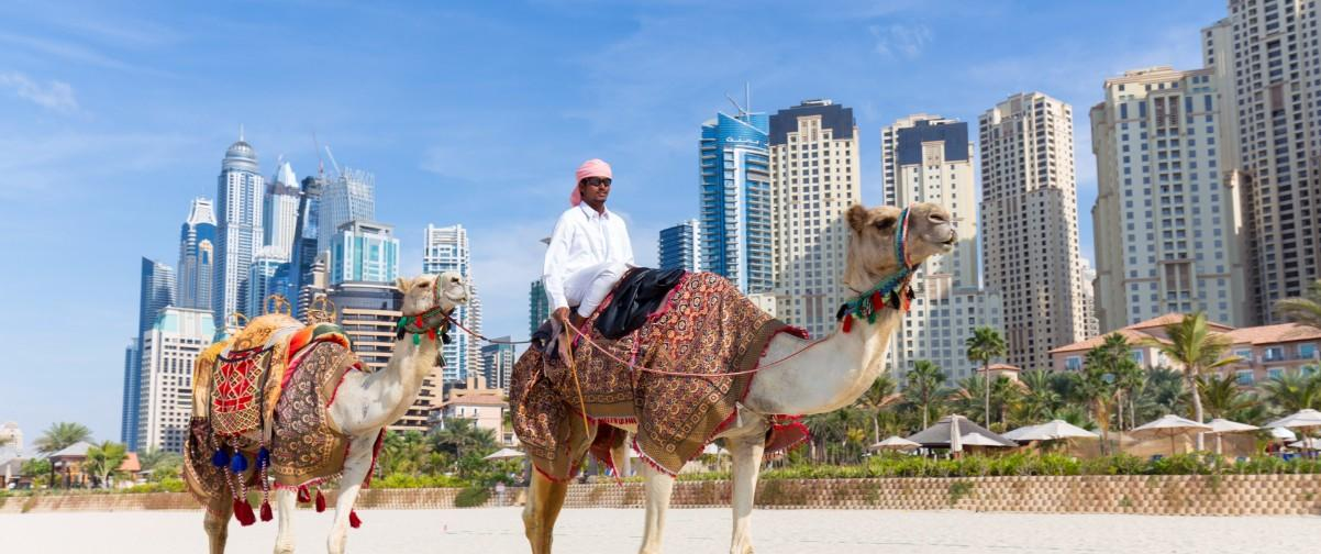 Guía Dubai, Paseo en camello, Dubai