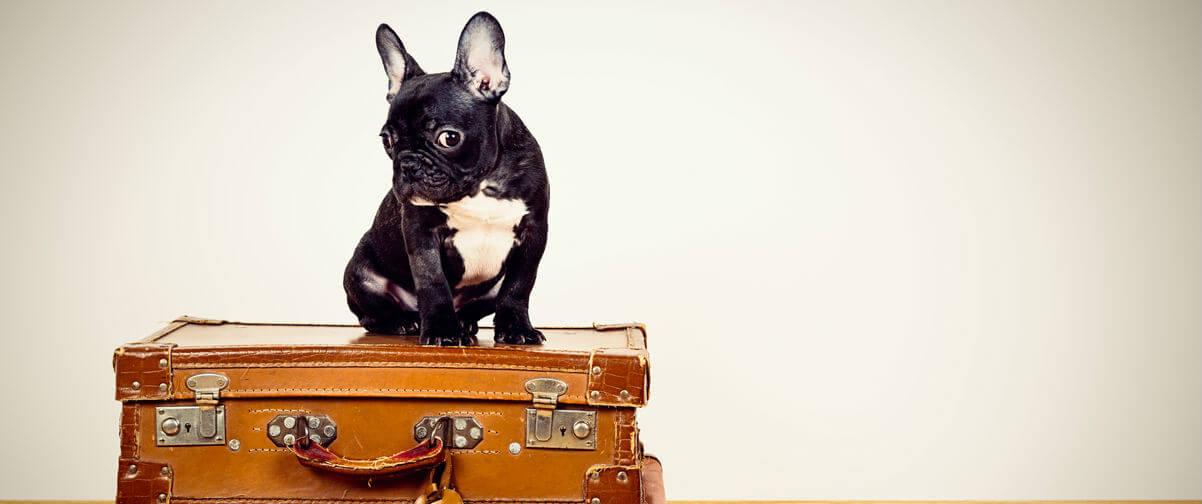 Viaje con animales