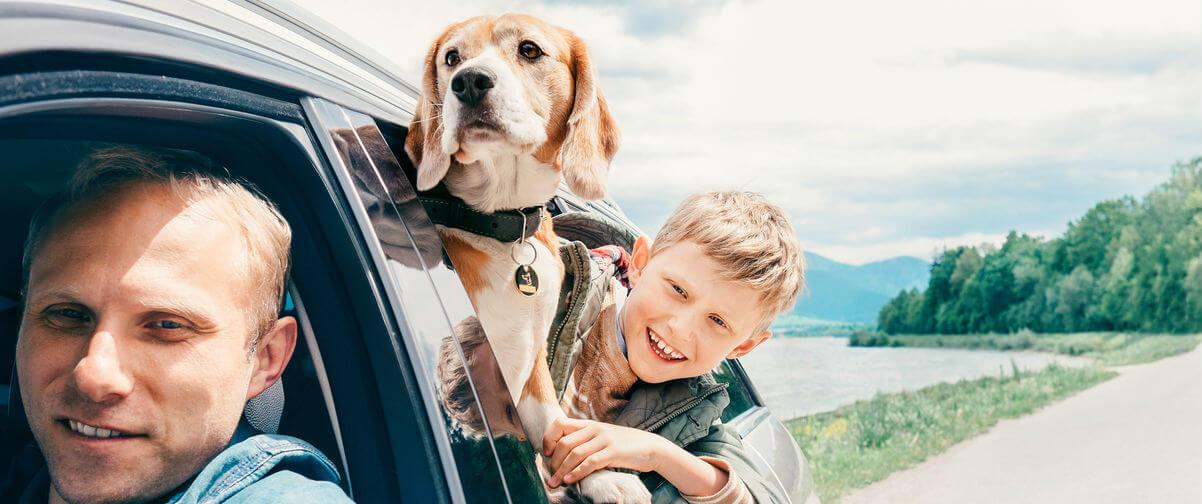 Viaje Animales