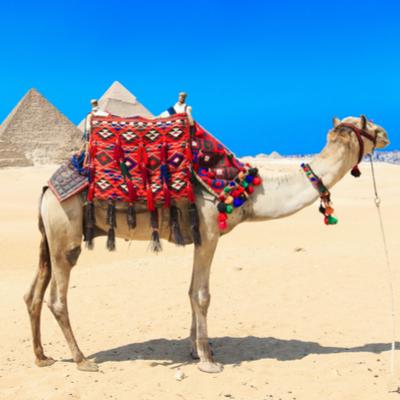 Guía El Cairo, Camello