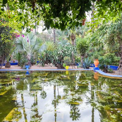 Guía Marrakech, Jardines Majorelle