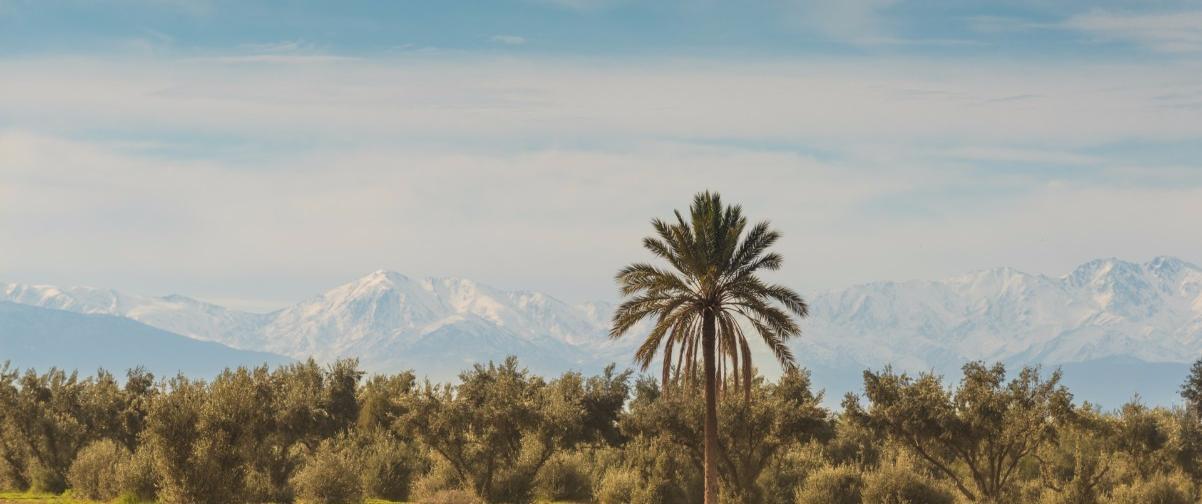 Guía Marrakech, Palmeral