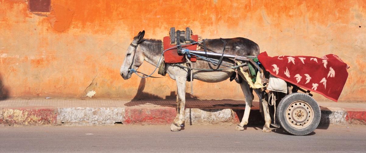 Guía Marrakech, Verano