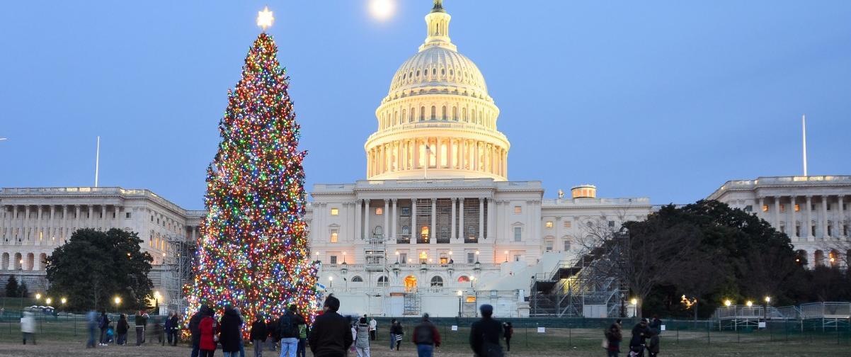 Guía Washington, Árbol Navidad Washington
