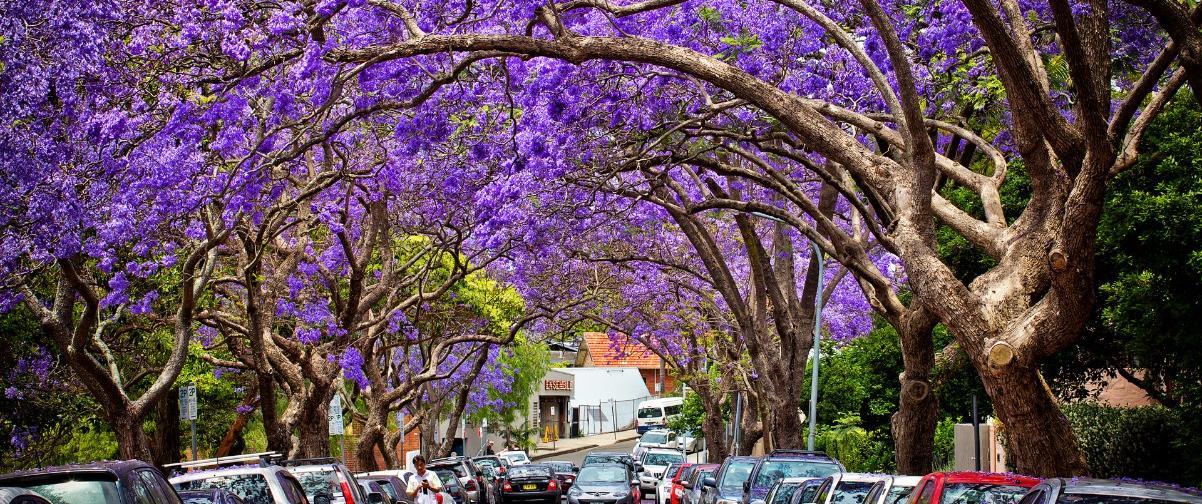 Guía Sídney, Primavera en Sídney