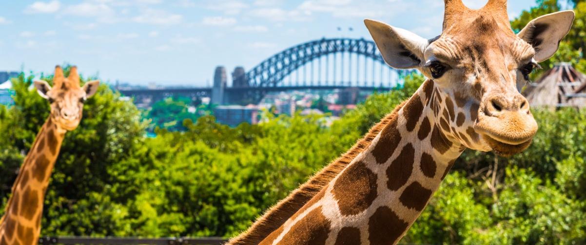 Zoo Taronga