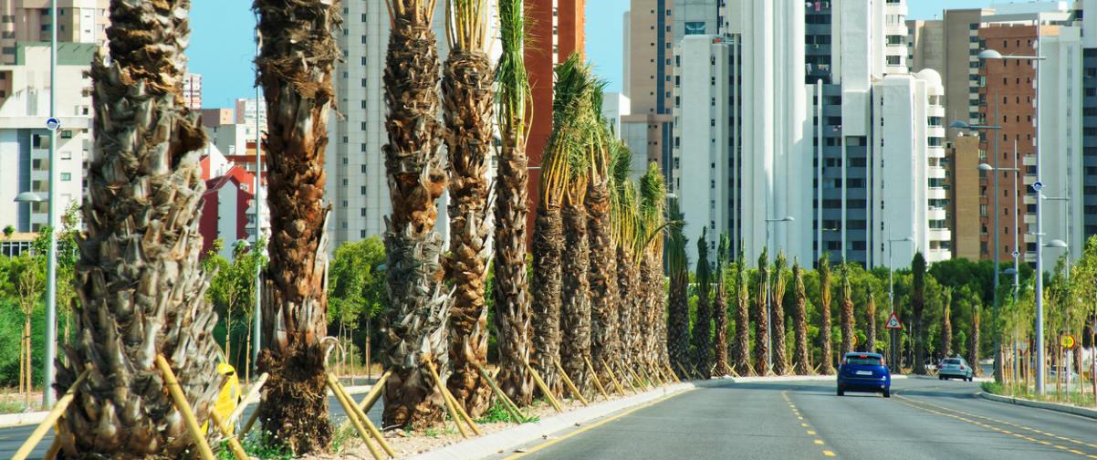 Guía Alicante, Elche