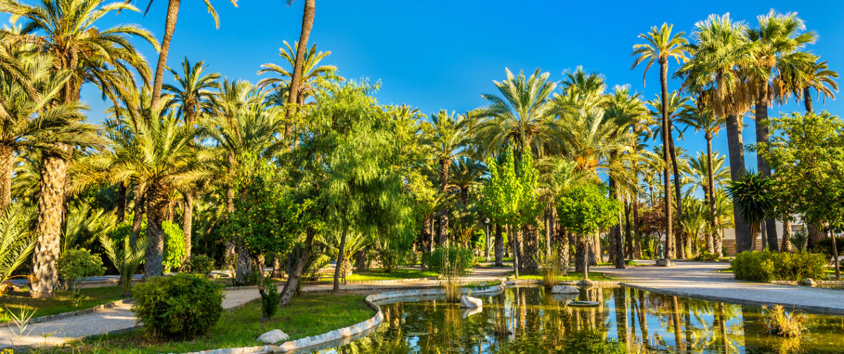 Guía Alicante, Palmeral de Alicante
