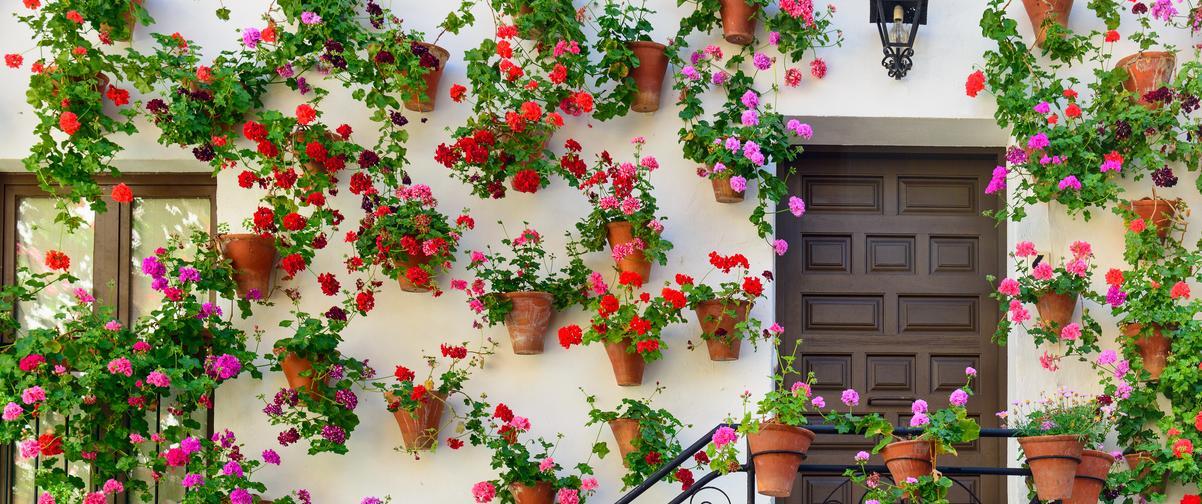 Guía Córdoba, Patio de las flores