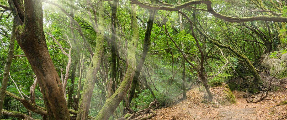 Guía Tenerife, Bosque tropical de Anaga
