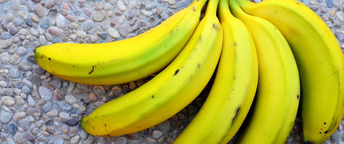 Guía Tenerife, Plátanos de Canarias